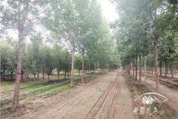 恒达注册平台_河北:苗木的春天更需理性