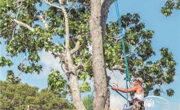 恒达注册_谈园林树木修剪标准(上)