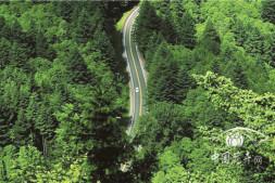 恒达正规么_森林生态旅游等将获政策扶持