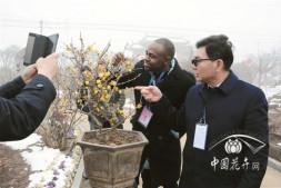 恒达公测_第八届中国·鄢陵蜡梅梅花文化节开幕
