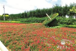 恒达注册登录_节约型园林的典范 记山东省济南市商河县银河路(高速连接线)绿化项目