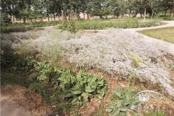 """恒达注册_荒漠植物""""大本营""""(上)"""" ———吐鲁番沙漠植物园"""