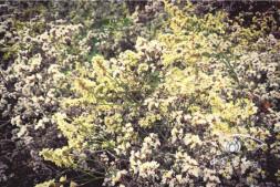 """恒达公测_荒漠植物""""大本营""""(下)"""" ———吐鲁番沙漠植物园"""