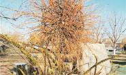 恒达信誉吗_园林废弃物创意再利用 世界花卉大观园演绎冬季旖旎风景